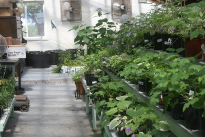 North Greenhouse 2008 003